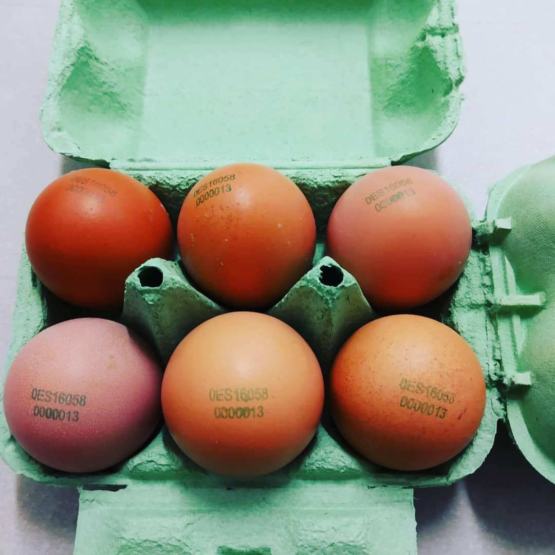 huevos los ecologicos molinos estuche abierto