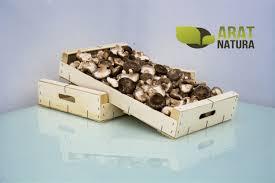 shiitake fresco ecologico arat natura granel 200gr