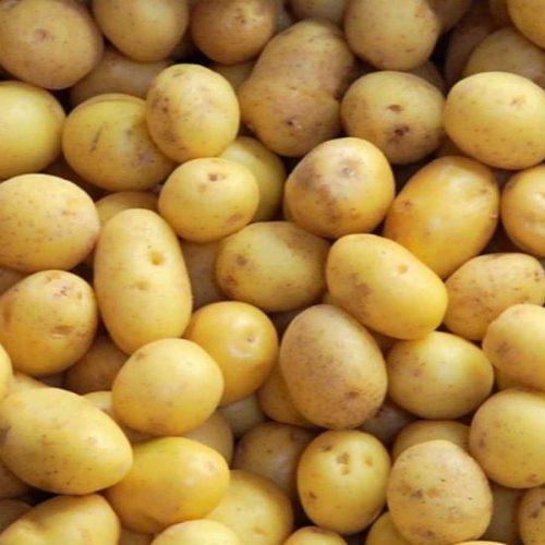 patata nueva jaerla