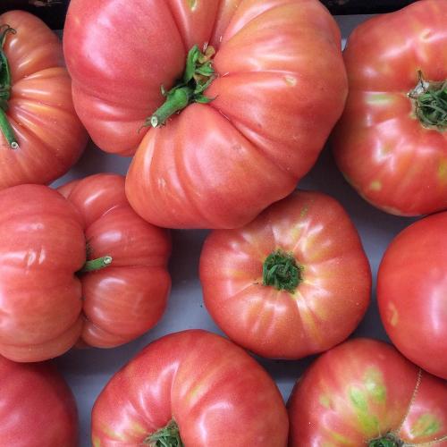 tomate rosa bioo de km0