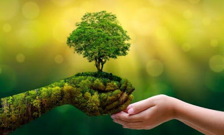 dia-del-medio-ambiente-mano verde y mano infantil