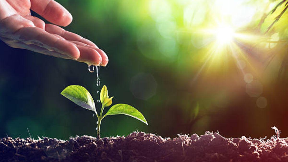 dia-mundial-del-medio-ambiente-agricultura-ecologica